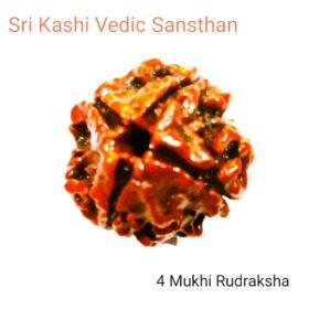 4 char mukhi rudraksha