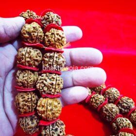 big size rudraksha mala;