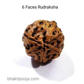 six mukhi rudraksha