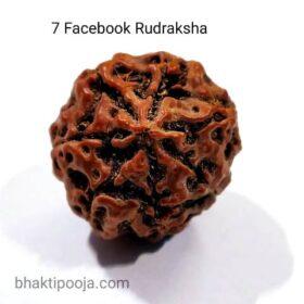 7 mukhi rudraksha big size bead