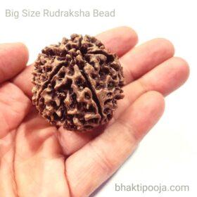 big size rudraksha bead