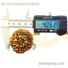big size nepal rudraksha bead